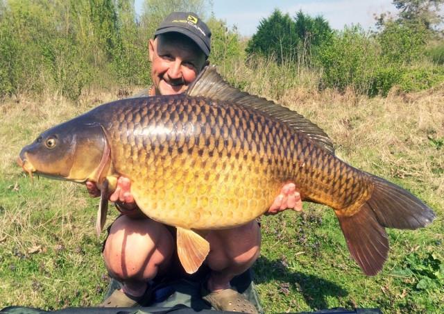 Thực chất, cá chép được liệt vào một trong những loài cá cỡ nhỏ
