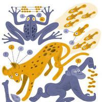 Động vật có biết đếm như người?