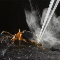 Loài bọ bị kẻ thù nuốt vẫn thoát nhờ vũ khí đặc biệt