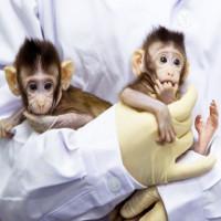 Số phận đôi khỉ nhân bản đầu tiên trên thế giới ở Trung Quốc