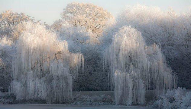 Sương muối được tạo ra tương tự như băng giá.