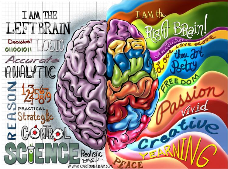 Có sự khác biệt tinh tế trong cấu trúc não của những người thuận tay trái và thuận tay phải.