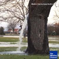 Video: Hiện tượng nước ồ ạt trào ra từ thân cổ thụ