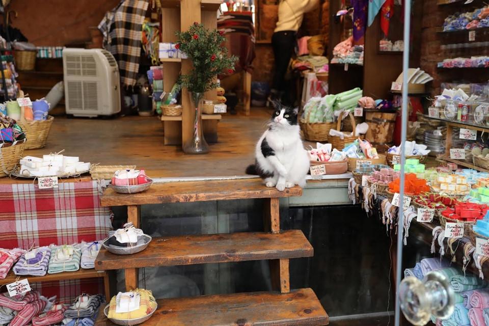 Những con mèo đã trở thành phần không thể thiếu trong đời sống của người dân ở thành phố chia đôi bờ Á- Âu