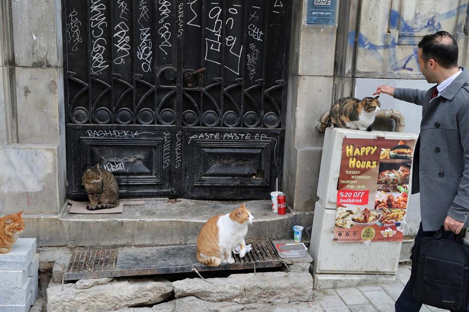 Những chủ cửa hàng và người dân địa phương biết rõ về những con mèo sống trong khu dân cư