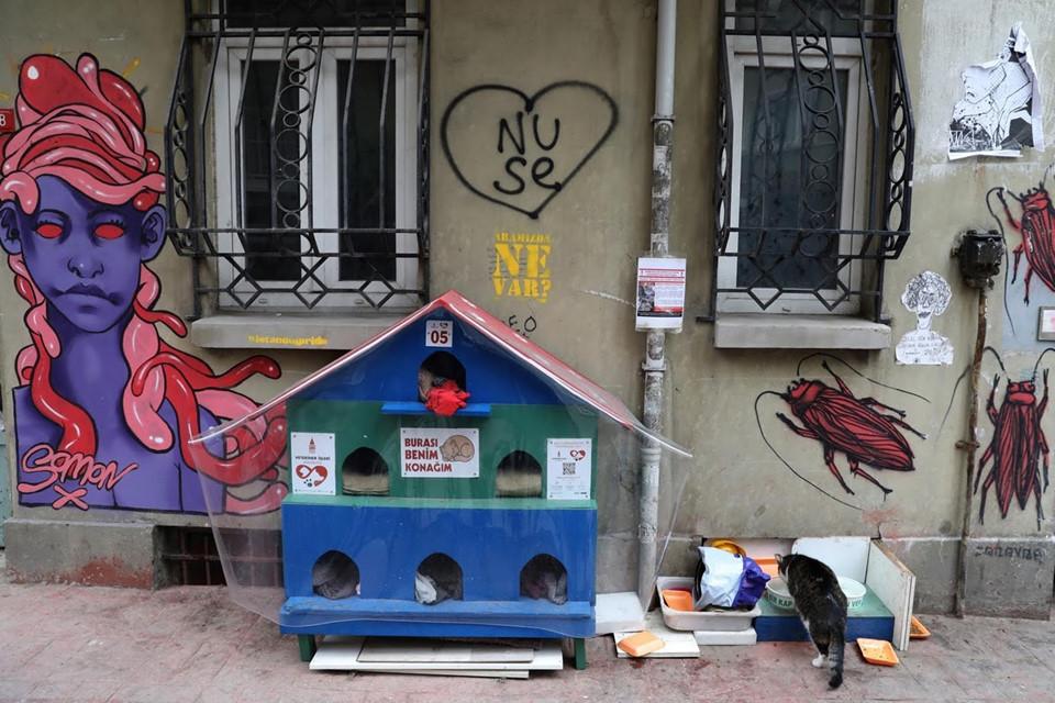 Một số người yêu mèo ở Istanbul mua nhà cho những con mèo lang thang để chúng không bị lạnh trong mùa đông
