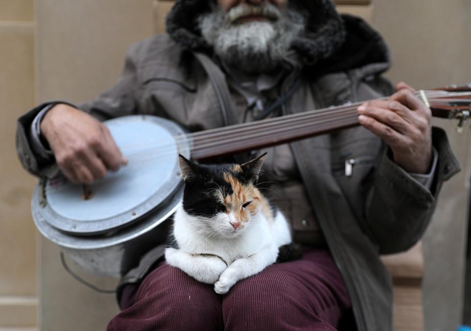 Ở quận Cihangir, nơi hai bên đường đầy rẫy những ngôi nhà dành cho mèo