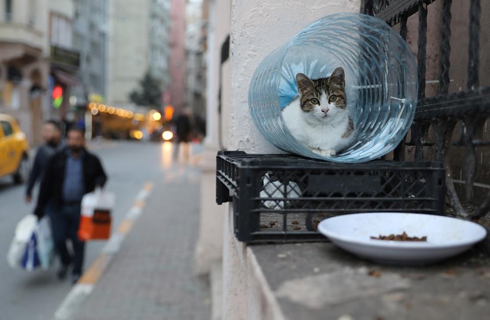 Trên những con phố nhỏ hẹp ở Istanbul, cố đô Thổ Nhĩ Kỳ, những con mèo ngồi trên mái nhà, bệ cửa...