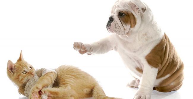 """Chó là một trong 12 con giáp và nằm trong """"lục súc"""""""