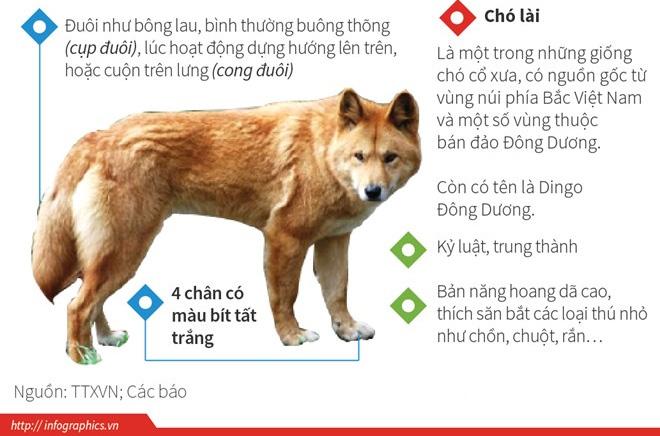 Chó Lài