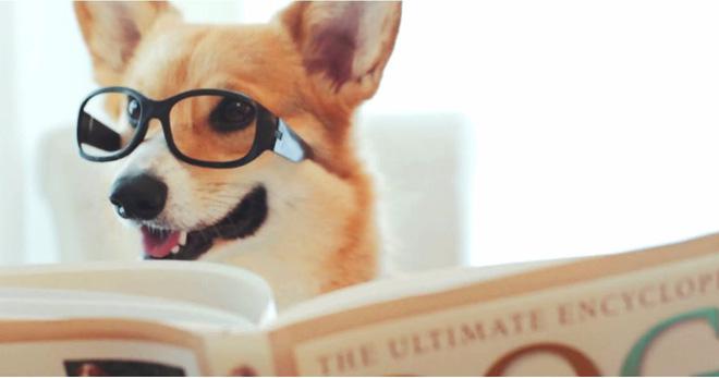 Chó có thể nhận diện được chữ
