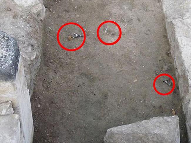 Chim chóc chết bí ẩn bên ngoài ngôi đền cổ.