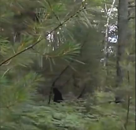 Một số người dùng mạng tin rằng đây chính là Bigfoot với hai con.