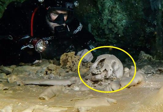 Các nhà khoa học tin rằng, chiếc sọ này thuộc kỷ Pleistocene.