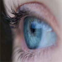 Một cơ quan giả bắt chước những gì xảy ra trong một cái chớp mắt