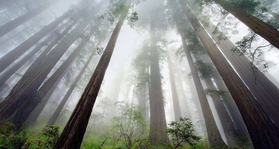 Khí hậu ven biển tạo ra sương dày phủ lên rừng,