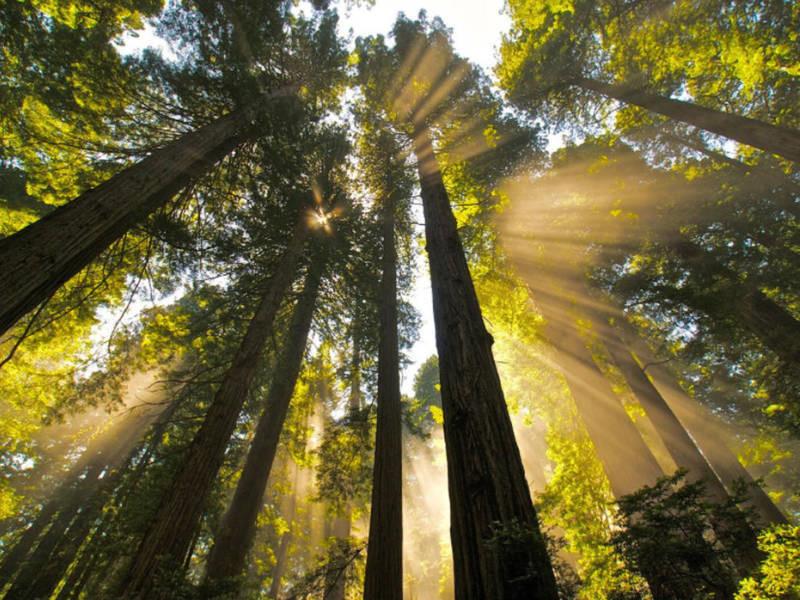 Năm 1968, công viên quốc gia Redwood được thành lập