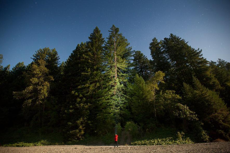 Du khách có thể đến công viên quốc gia Redwood để chiêm ngưỡng những cây gỗ đỏ ấn tượng này.
