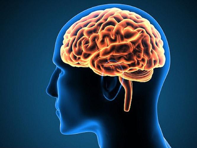 Bộ não lớn hơn có thể khiến cơ bắp nhỏ hơn