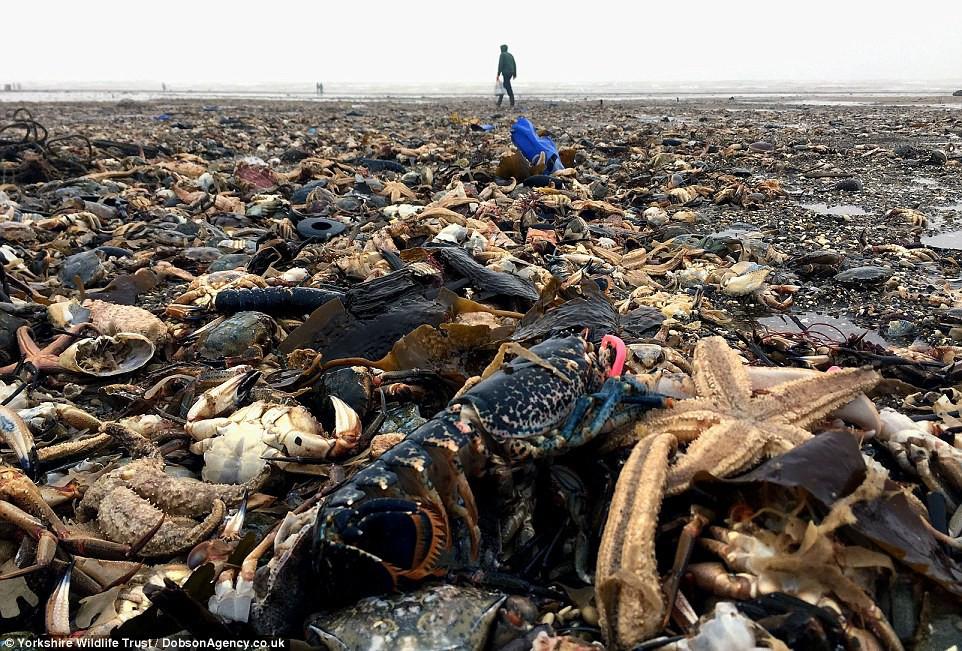 Bãi biển tại East Yorkshire - một bãi chiến trường tan hoang.