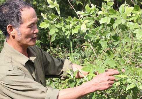 Ông Trần Ngọc Lâm bên một cây thuốc quý.