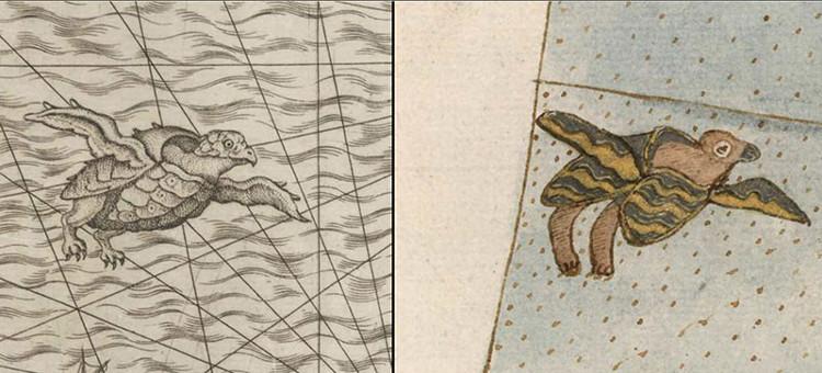 Rùa có cánh