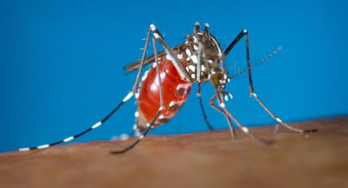 Muỗi châu Phi
