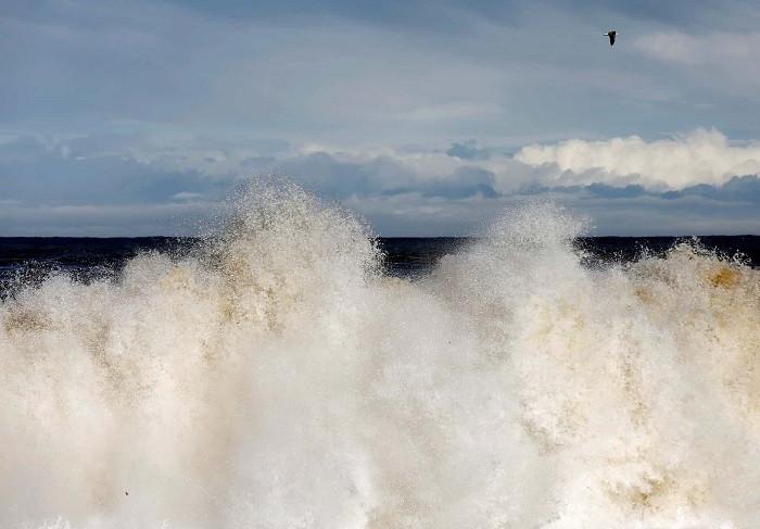 Sự xuất hiện của bức tường có thể ngăn dòng chảy tự nhiên của nước từ đất liền