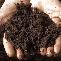 Tìm ra loại kháng sinh mới trong... đất