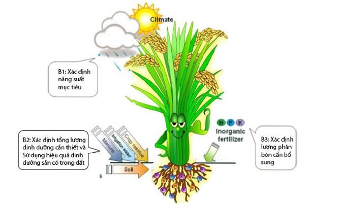 """Kỹ thuật """"ô khuyết"""" giúp xác định vai trò của nguyên tố đa lượng (đạm, lân và kali) đối với cây lúa."""