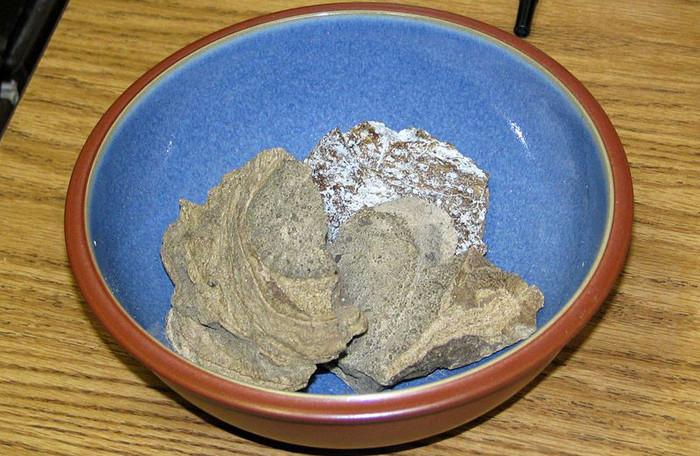 Long diên hương có nguồn gốc từ hệ tiêu hóa của cá nhà táng