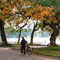 Hồ Gươm đẹp quyến rũ mùa lộc vừng thay lá
