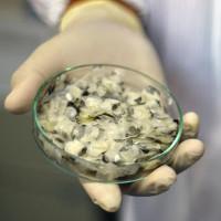 Phát hiện công dụng chữa lành vết thương của collagen trong vảy cá