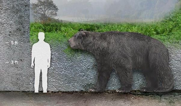 Đo kích cỡ chiều cao của gấu Arectotherium và con người.