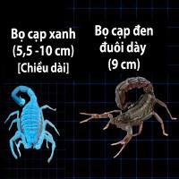 Video: So sánh kích thước những loài bọ cạp lớn nhất thế giới