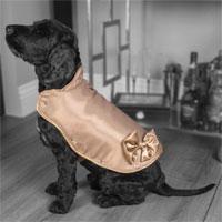 Áo khoác cho chó đắt nhất thế giới