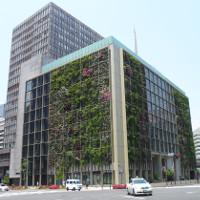 Tường cây - giải pháp làm xanh đô thị hiện đại