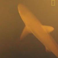 Các nhà khoa học bất ngờ thấy thứ này khi đặt máy quay trong lòng núi lửa dưới biển