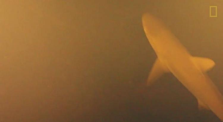 Cá mập xuất hiện trong khung hình.
