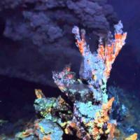 Tổ tiên của tất cả các vật thể sống là gì?