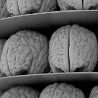 Tìm ra thuật toán mô phỏng bộ não con người, nhưng không có cỗ máy nào vận hành được