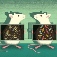 """Thực trạng các phòng thí nghiệm tại Anh khi vô tình tạo ra một """"thành phố chuột"""""""