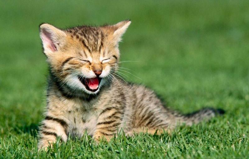 Mèo: 90%