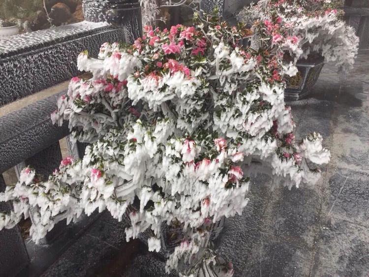 Hôm nay cũng là ngày đầu tiên lễ hội hoa đỗ quyên tại Fansipan.