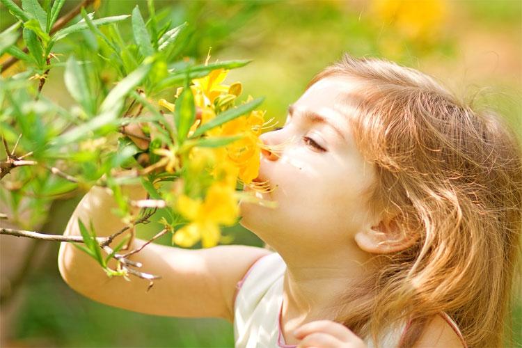 Khả năng cảm nhận mùi thay đổi theo mùa