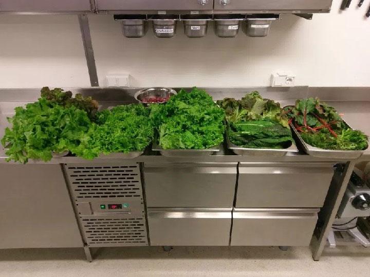 Những mớ rau đầu tiên được thu hoạch.