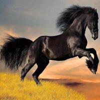 Những con ngựa nổi tiếng trong sử sách Trung Quốc