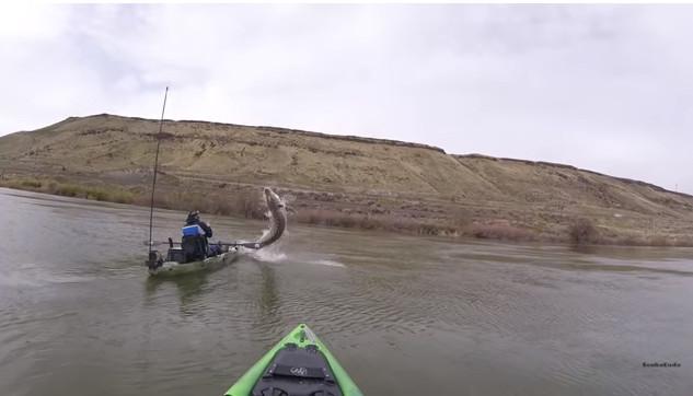 Cá tầm khổng lồ