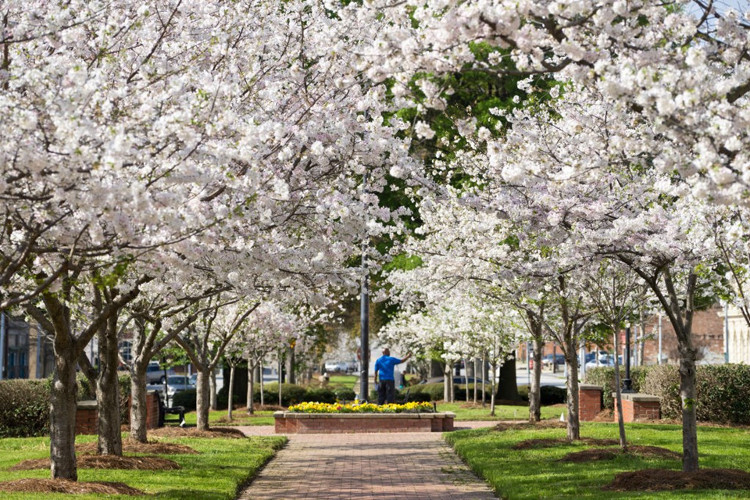 Đến đây vào mùa xuân, bạn sẽ thấy một cảnh tượng ngoạn mục hiếm nơi nào có được.