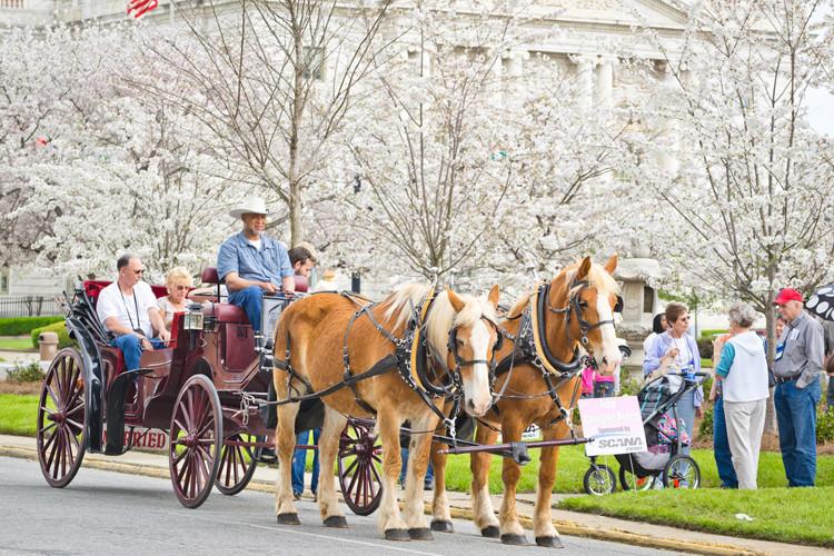 Lễ hội diễn ra từ cuối tháng 3 đến đầu tháng 4.